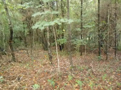 Loudon County Residential Lots & Land For Sale: 161 Pocola Way
