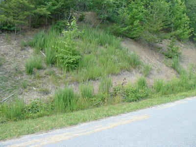Claiborne County Residential Lots & Land For Sale: Lot 818 Wildcat Hollow Rd