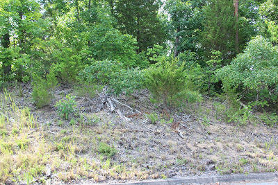 Sevierville Residential Lots & Land For Sale: Lot 1 Harbor Point Dr