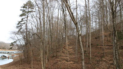 Campbell County Residential Lots & Land For Sale: Norris Crest Drive