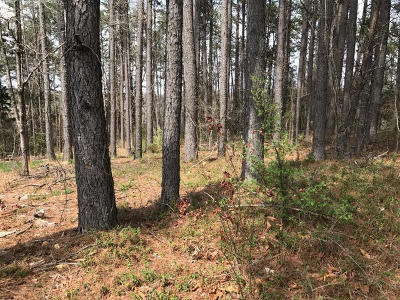 Residential Lots & Land For Sale: 134 Gigi Lane