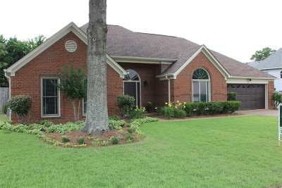 Collierville Single Family Home Contingent: 905 Grapevine