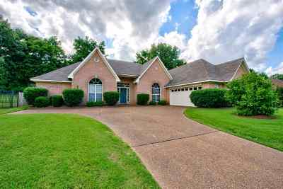 Collierville Single Family Home Contingent: 329 Bradford