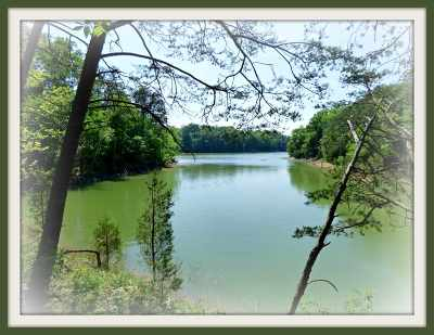 Dandridge Residential Lots & Land For Sale: P-30 Burchfield Rd