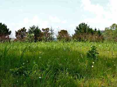 Jefferson County Residential Lots & Land For Sale: 441 Riverbend