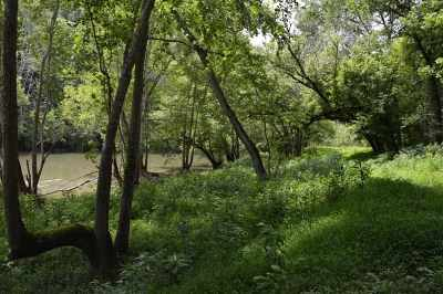 Residential Lots & Land For Sale: 2550 Goins Chapel Rd