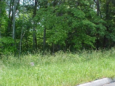Grainger County Residential Lots & Land For Sale: Lot 47 Cherokee Drive