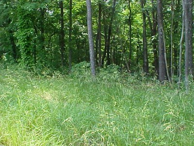 Grainger County Residential Lots & Land For Sale: Lot 48 Cherokee Drive