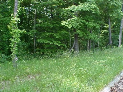 Grainger County Residential Lots & Land For Sale: Lot 49 Cherokee Drive