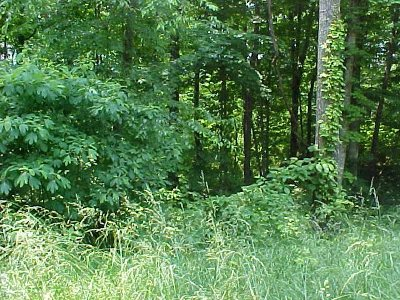 Grainger County Residential Lots & Land For Sale: Lot 50 Cherokee Drive