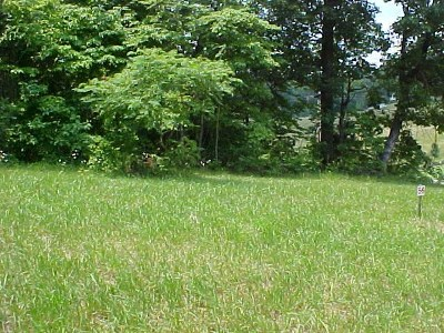 Grainger County Residential Lots & Land For Sale: Lot 55 Cherokee Drive