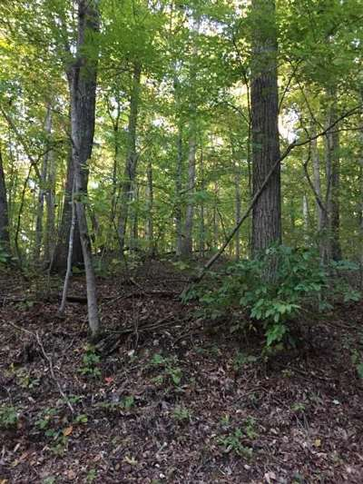 Cocke County, Greene County, Grainger County, Hamblen County, Jefferson County, Hancock County, Union County, Claiborne County Residential Lots & Land For Sale: 22ac Elm Ridge Road