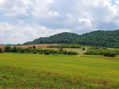 Hawkins County Residential Lots & Land For Sale: Hickory Cove Rd