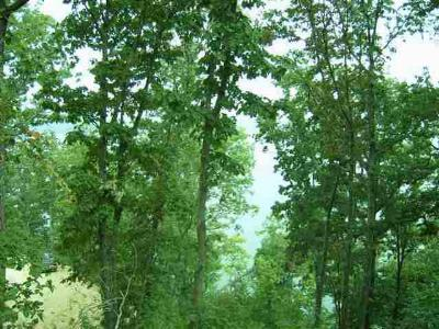 Rhea County Residential Lots & Land For Sale: Lot 21 Lakeside Lodge
