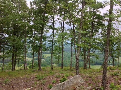Rhea County Residential Lots & Land For Sale: 1177 Escape Drive