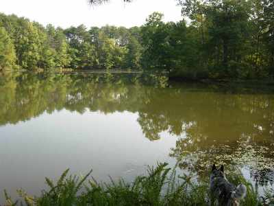 Meigs County Residential Lots & Land For Sale: Armstrong Ferry Road