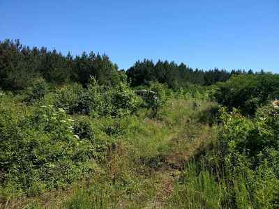 Englewood Residential Lots & Land For Sale: 451 County Road 550