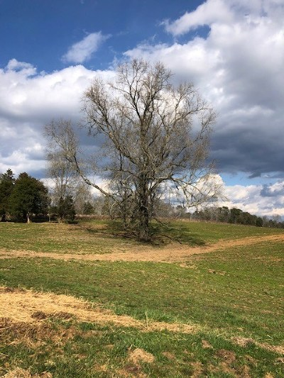 Athens Residential Lots & Land For Sale: County Road 603