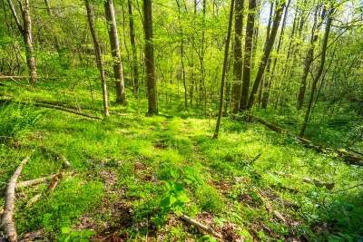 Englewood Residential Lots & Land For Sale: County Road 484