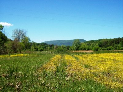 Tellico Plains Residential Lots & Land For Sale: 2127 Reliance Road