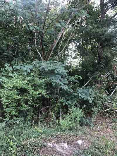 Etowah Residential Lots & Land For Sale: County Road 890
