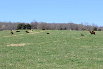 Burns TN Residential Lots & Land For Sale: $599,900