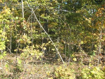Adams, Clarksville, Springfield, Dover Residential Lots & Land For Sale: Red Bud Rd