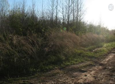 Adams, Clarksville, Springfield, Dover Residential Lots & Land For Sale: Lisa Cir