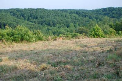 Centerville Residential Lots & Land For Sale: 618 Joes Branch Rd