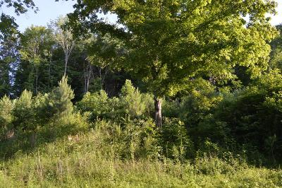 Erin Residential Lots & Land For Sale: 171 Roby Drive
