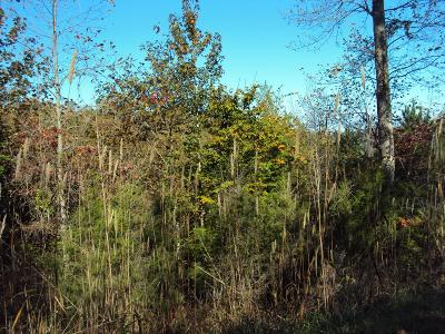 Smithville TN Residential Lots & Land For Sale: $39,900