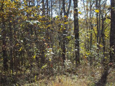 Smithville TN Residential Lots & Land For Sale: $24,900