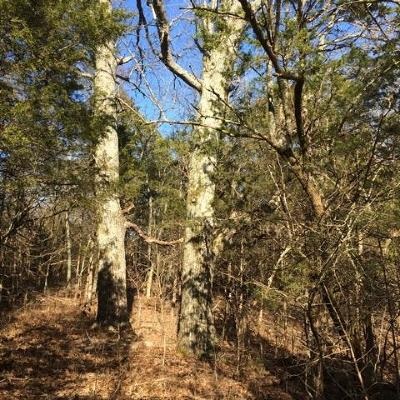 Lebanon Residential Lots & Land For Sale: 6 Taylorsville Road