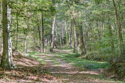Williamson County Residential Lots & Land For Sale: 3 Natchez Ridge Ln