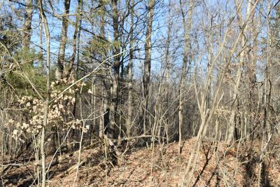 Clarksville Residential Lots & Land For Sale: 1820 Breezemont Dr