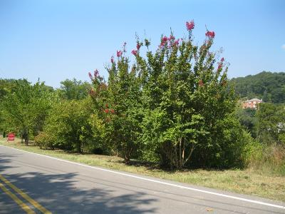 Brentwood Residential Lots & Land Under Contract - Showing: 1230 Cliftee Dr
