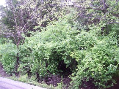 Davidson County Residential Lots & Land For Sale: 4216 Enchanted Ct