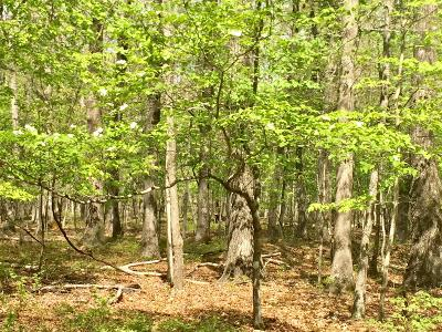 Sewanee Residential Lots & Land For Sale: 4 Can-Tex