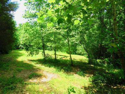 Adams Residential Lots & Land For Sale: Trough Springs Rd