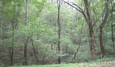 Residential Lots & Land For Sale: Straight Creek