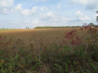 Hohenwald Residential Lots & Land Under Contract - Showing: Colonial