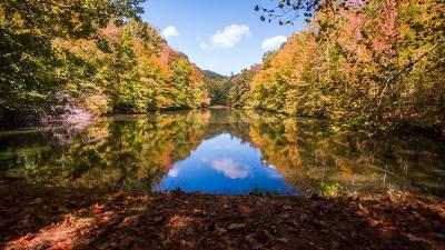Williamson County Residential Lots & Land For Sale: 5478 Pinewood Rd