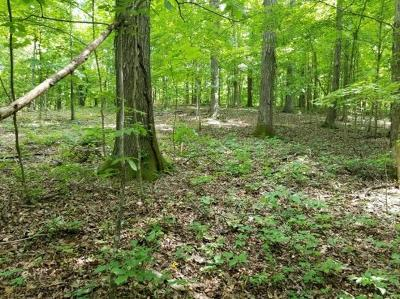 Hendersonville Residential Lots & Land For Sale: 10 Weeping Willow Rd