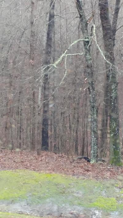Hohenwald Residential Lots & Land Under Contract - Not Showing: Metal Ford Rd