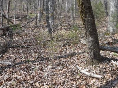 Residential Lots & Land For Sale: 4 .72 Ac.mountain Dr