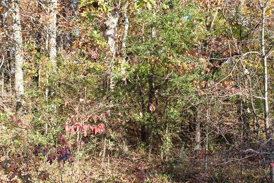 Dickson Residential Lots & Land For Sale: Charles Ct