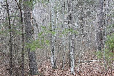 Residential Lots & Land For Sale: 1 Timberwood Trace