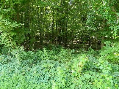 Thompsons Station  Residential Lots & Land For Sale: Bethesda Rd