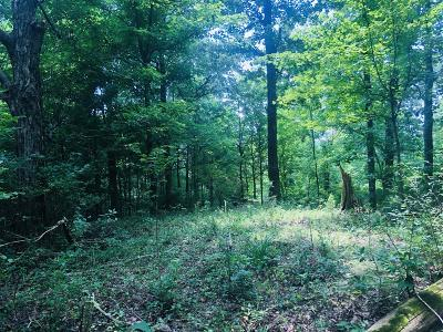 Columbia  Residential Lots & Land Active Under Contract: Cayce Ln