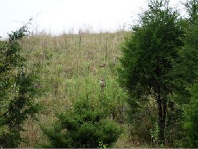 Greene County Residential Lots & Land For Sale: Lot 2 Roaring Fork Rd